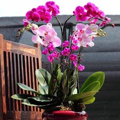 pink orchid :)