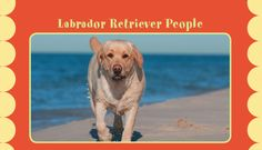 Did you know that your choice of canine can say a lot about you?#lab #nylabone #dog