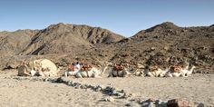 Wadi Gemal, Egypt Marsa Alam, Egypt, Dolores Park, National Parks, African, Travel, Image, Viajes, Destinations