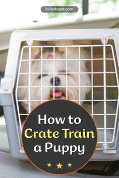 How to Crate Train a Puppy: It is important that you start crate training them early and keeping a close eye on them, particularly if they are still learning what is expected of them. #CrateTrainingPuppy #AtNight #Schedule #Puppy Stop Puppy From Biting, Puppy Biting, Puppy Training Tips, Crate Training, Puppy Find, New Puppy, Dog Hand Signals, Best Puppies, Dog Crate