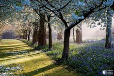 Частный сад Maple Glen - Путешествуем вместе