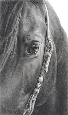 This is an amazing graphite and charcoal drawing entitled Ojo Moncito by artist Mary Ross Buchholz.