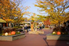 Autumn stroll around the foliage and pumpkins. Fall, Cape May Point, Ocean City, Jersey Cape, Cape May County, New Jersey