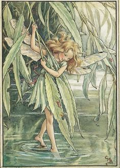 Illustration for the Willow Fairy from Flower Fairies of the Trees - Cicely Mary Barker
