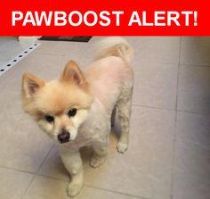 Please spread the word! Lincoln was last seen in Long Beach, CA 90806.    Nearest Address: Near W Spring St & Cedar Ave