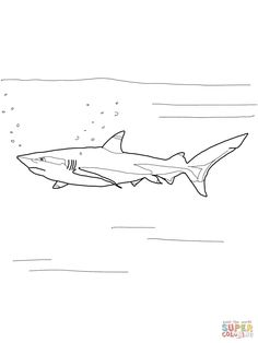 Images For > Realistic Sea Animal Coloring Pages Shark