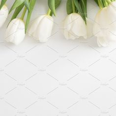 Tulips   Stock Image by TwigyPosts on @creativemarket Website Images, Tulips, Tulip