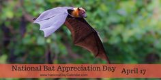 NATIONAL BAT APPRECIATION DAY National Bat Appreciation Day occurs annually on April 17th. April is the best time of the year to observe bats, as they are now beginning to emerge from hibernation.…