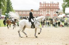 Blue Hors Matinee & Andreas Helgstrand - most amazing dressage team EVER!
