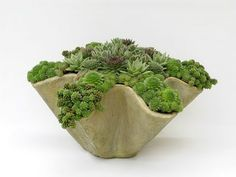 succulents in ruffle planter