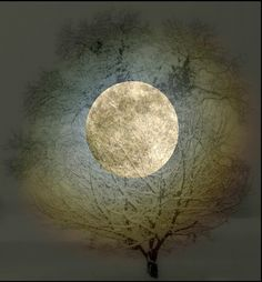 moonlight does always seem right.  | followpics.co