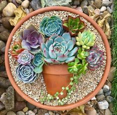 Deco trend: Small colorful DIY succulent flower garden pot in a pot - Garden Care, Garden Design and Gardening Supplies Succulent Gardening, Succulent Pots, Planting Succulents, Garden Pots, Planting Flowers, Organic Gardening, Indoor Gardening, Succulent Ideas, Potting Succulents Diy