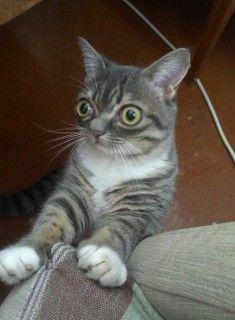 seance photo pour le chat 161 sur http://ift.tt/1oohFRS