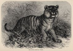 Pictorial Wonders and Tales of Wild Life, c.1880s