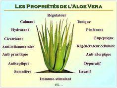 L'énergétique des plantes... - Voie Intérieure