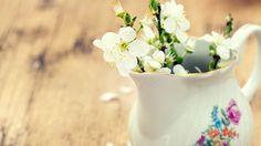 Synonyme de renouveau pour les chrétiens, Pâques marque généralement l'arrivée des belles journées printanières. Même si sa date change ? la fête est toujours célébrée le premier dimanche suivant la première pleine lune qui suit l'arrivée officielle du printemps ? Pâques demeure une des belles occasions pour offrir des fleurs qui marquent, généralement, l'éveil de la nature. En plus d'avoir l'embarras du choix, les fleurs que vous offrirez ont toutes une signification particulière. Les…