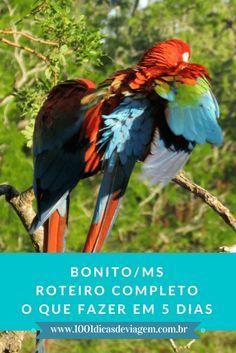 Roteiro completo em Bonito/MS - Conheça todos os passeios disponíveis e aproveite esse paraíso!