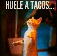 Gatos y tacos. Memes Humor, Cat Memes, Funny Cat Pictures, Funny Images, Spanish Pictures, Roman Love, Mexicans Be Like, Spanish Jokes, Mexican Memes