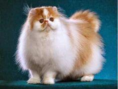Tanda-Tanda Kucing Hamil & Hal Penting yang Perlu Anda Ketahui