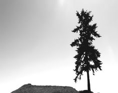 TITLE - slanted fir tree | a single Douglas fir slants on top of a hill in Washington State. black and white minimal nature photography.
