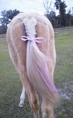Horses fishtail braid with pink bow