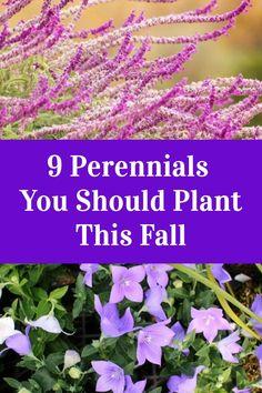 Garden Yard Ideas, Lawn And Garden, Garden Beds, Garden Projects, Garden Plants, Fall Perennials, Flowers Perennials, Planting Flowers, Outdoor Plants