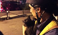 Band of Strangers Mobilize City to Rescue Cat From Montreal Bridge | Care2 Causes