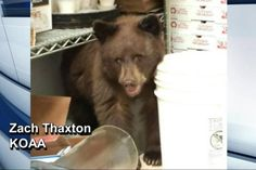 Injured bear cub removed from back of Colorado pizza shop. (KOAA/Zach Thaxton/Global News)