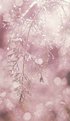 Pink Ice Crystals