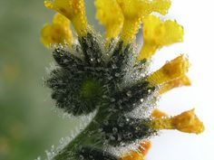 yellow_spiral by macrosnap, via Flickr