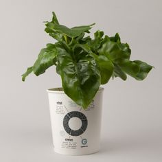 Ogreen Plant Superb