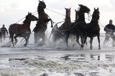 Lancering reddingsboot Ameland Op 3 juni 2009 ging het niet helemaal zoals het hoort te gaan en raakt een van de paarden verstrikt in het tuig werk