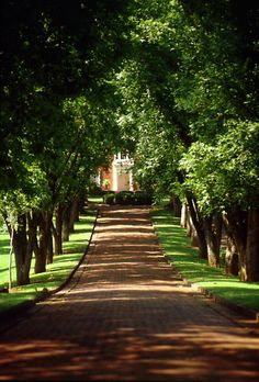 large brick driveway with trees lining it...... would rather have palmetto trees though