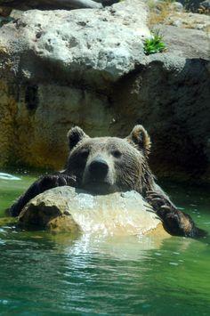 Rome. Bear at zoo