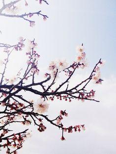 Bloom (by little lies & massive dreams)