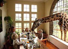 Neste hotel na África, os animais dividem o café da manhã com os hóspedes