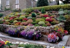 In real life this is a Scottish cottage heather garden...but to me it looks like a yard full of colorful Tribbles ;-)