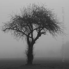 Silent Mood