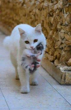 Absolutely Beautiful Cute Sht Pinterest Cat Animal And Kitty - 20 adorable photos proving that children really need a cat in their life