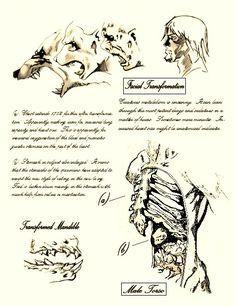 Warewolf transformation...