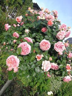Floral Wreath, Gardening, Wreaths, Plants, Home Decor, Lawn And Garden, Floral Crown, Decoration Home, Door Wreaths
