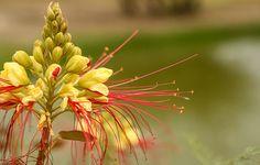 Liste des plantes qui se contentent d'une humidité réduite