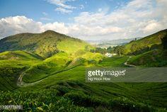 Stock Photo : Tea plantation in Cameron Highlands