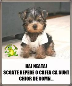 Good Morning, Haha, Humor, Funny, Memes, Diy Dog, Good Day, Buen Dia, Humour