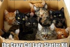 Funny pictures about Crazy Cat Lady Starter Kit. Oh, and cool pics about Crazy Cat Lady Starter Kit. Also, Crazy Cat Lady Starter Kit photos. Funny Cat Memes, Funny Cute, Memes Humor, Funny Dogs, Funny Horses, Funny Stuff, Funniest Jokes, Scary Funny, Hilarious Animals
