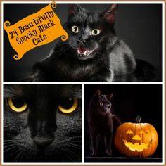 24 Beautifully Spooky Black Cats