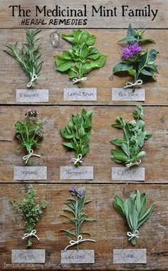 The Medicinal Mint Family All About the uses of these amazing medicinal herbs > Rosemary, Lemon Balm, Bee Balm, Oregano, Peppermint, Catnip, Thyme, Lavender, Sage More tips on Herbalism here...