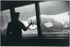 [Whale in Aquarium]  Garry Winogrand (American, 1928–1984) Date: 1963