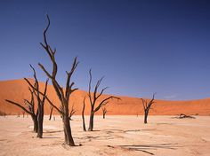 Deadvlei at Namib-Naukluft Park, Namibia / 25 Surreal Places You Won't Believe Actually Exist