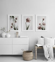 Pink Tulipe no3 Post